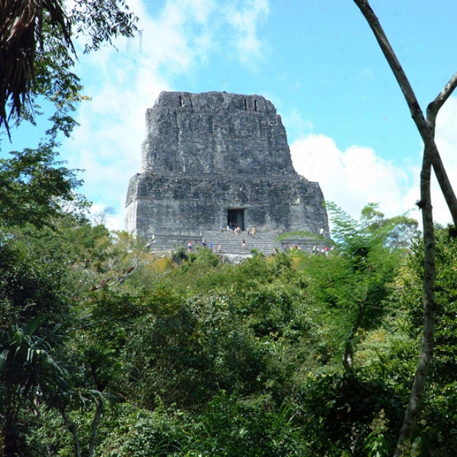 Guatemala's Tikal National Park - Animals And Plants: Audio Journeys (unabridgged)