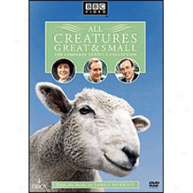 All Creatures Chief And Small Series 6 Dvd