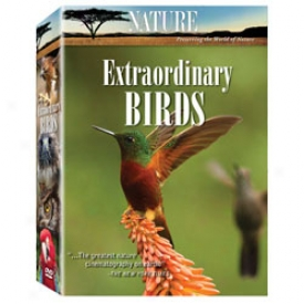 Extraordinary Birds Dvd