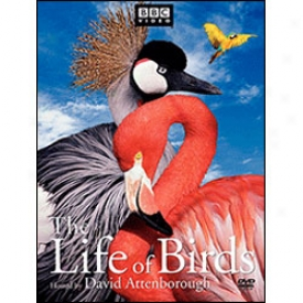 Life Of Birds Dvd
