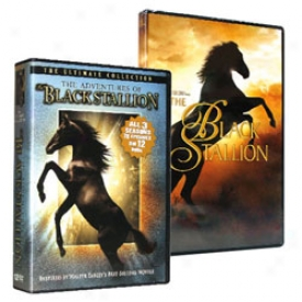 The Black Stallion Cllection Dvd