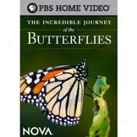 The Incredible Journey Of The Butterflies Dvd