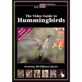 The Video Guie To Hummingbirds Dvd