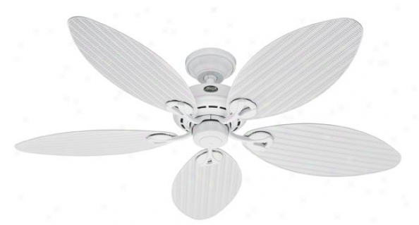 23979 - Hunter - 23979 > Ceiling Fans