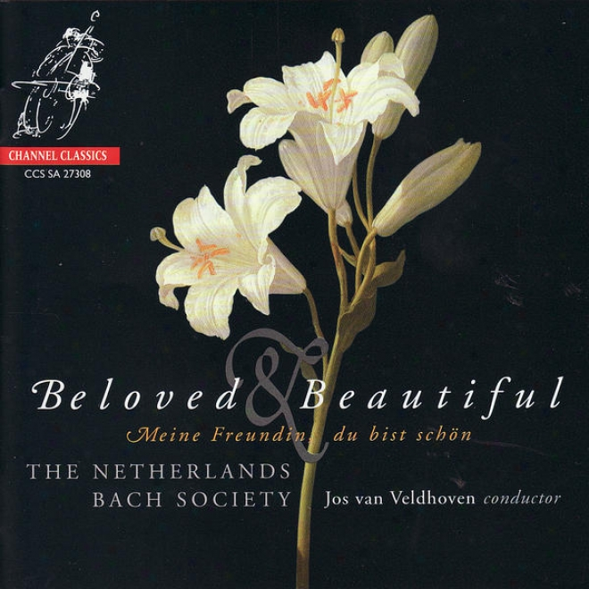 Beloved & Beautiful - The Netherlands Bach Society Performs Bã¶hm, J.c. Bach, Schã¼tz, & J.s. Bach