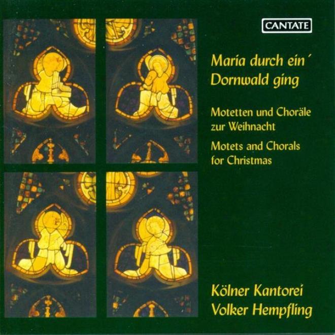 Choral Contrive: Cologne Kantorei - Schroeter, L. / Sweelinck, J.p. / Brahms, J. / Bruch, M. / Reger, M. (motets For Christmas)