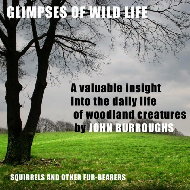 Glimpses Of Undomesticated Society (unabridged), A Valuable Insight Into The Daily Life Of Woodland Creatures, By John Burr0ughs