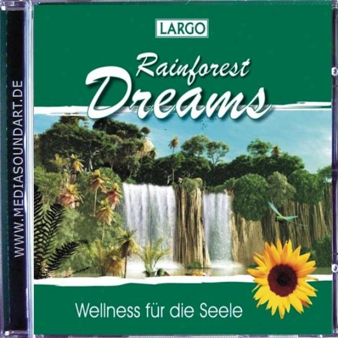 Rainforest Dreams - Stimmungsvolle Naturgrrã¤usche Mit Entspannungsmusik (gema-frei)
