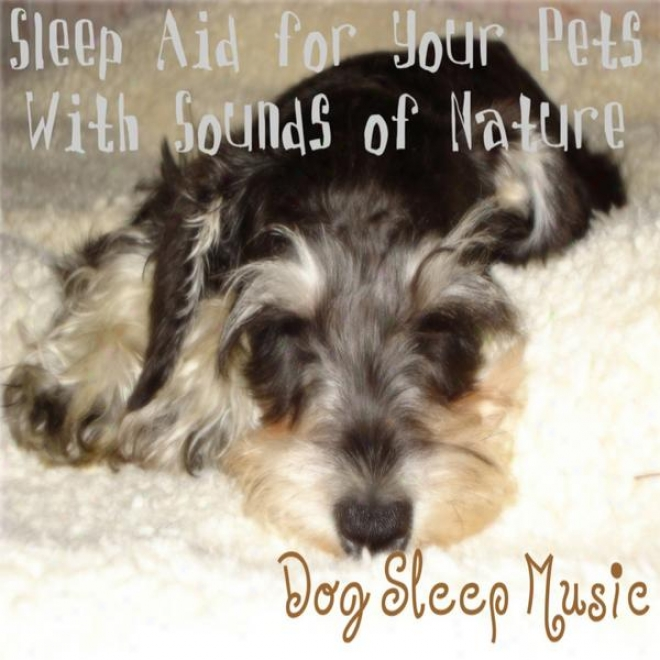 Sleep Aid For Your Pets With Sounds Of Nature; Music For Dogs & House Hold Pets, Sleep Lullaby