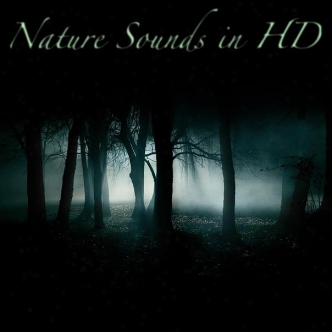 SoundsO f Nature Hypnotizing Forest- Wolves, Crickets, Owls And Singing Birds