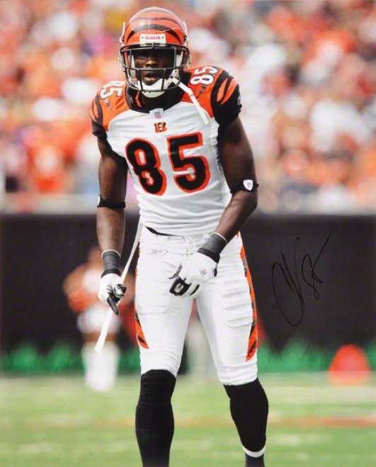 Chad Johnson Cincinnati Bengals 16x20 Autographed Photograph