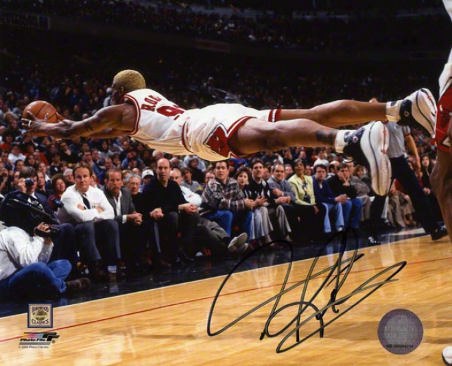 Dennis Rodman Autographed 8x10 Photograph  Particulars: Chicago Bulls, Divlng For Ball