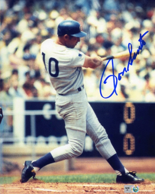 Ron Santo Chicago Cubs - Swinging - 8x10 Autographed Photograph