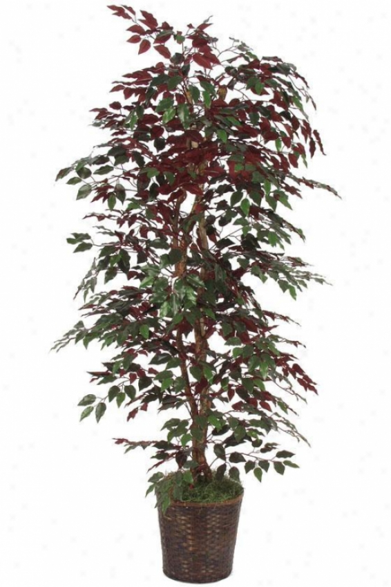 """78""""h Capensia Bush - 78""""hx36""""d, Green"""