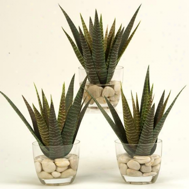 """""""agave In Glass Dish - Set Of 3 - 14""""""""hx12""""""""w, Green"""""""