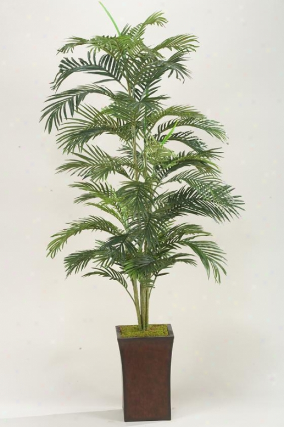 Areca Palm In Flared Planter - 6.5'h, Green