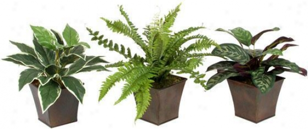 Assorted Foliage In Metal Planter - Set Of 3 - Flow Of 3, Green