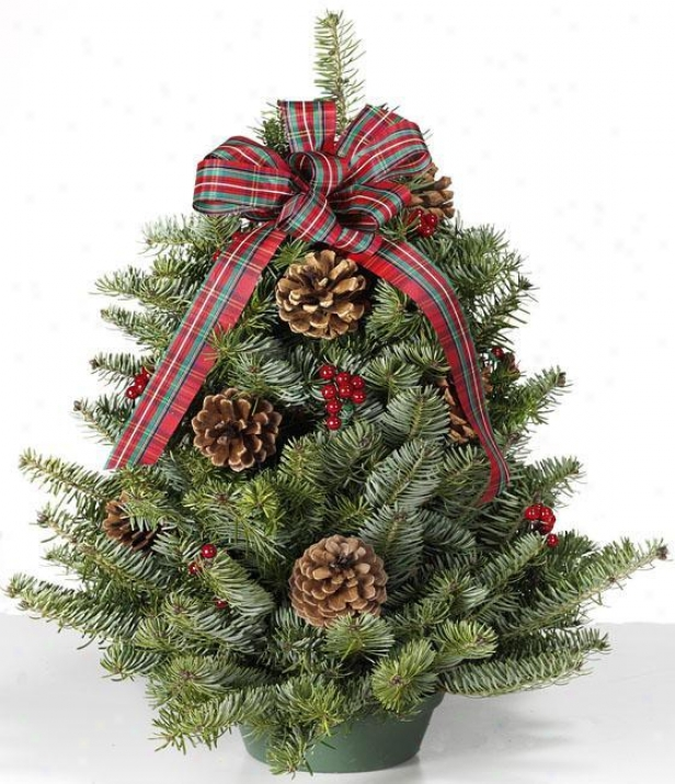 """balsam Tabletop Tree - 18"""", Green"""