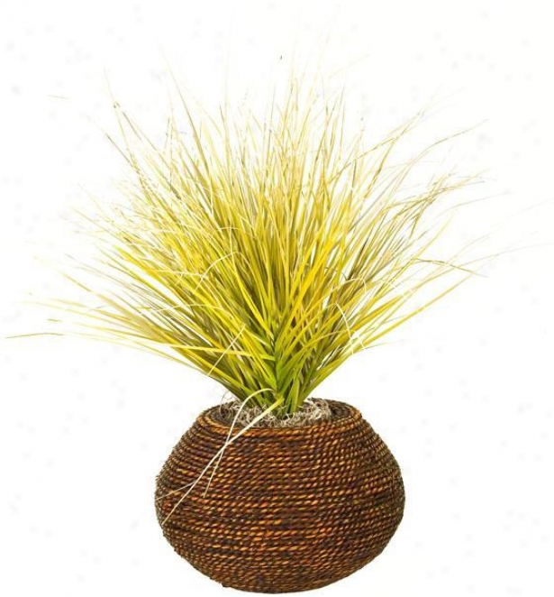 """beach Onion Grass In Round Braided Rope Planter - 16""""hx16""""w, Green"""