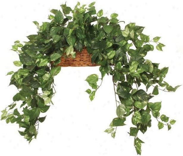 """""""botanica Long Trail Pothos Ledge Basket - 18""""""""hx24""""""""w, Green"""""""