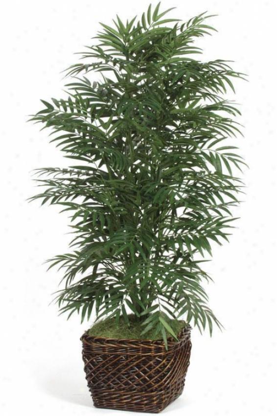 """""""botanica Pyienix Palm - 60""""""""h, Green"""""""