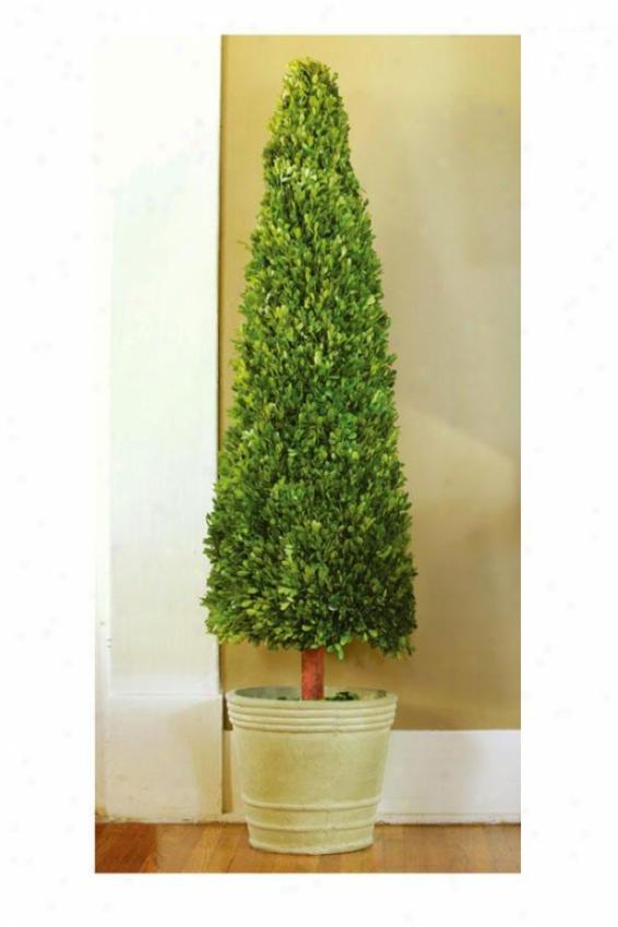 Boxwood Cone - 4 F, Green