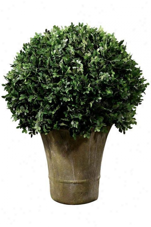 """boxwood Foliage Topiary With Round Ceramic-like Base - Single 30""""h, Rnd Ceramic-lk"""