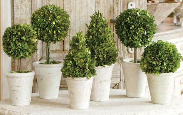 Boxwood Topiary - Set Of 6 - Set Of 6 Assrtd, Green