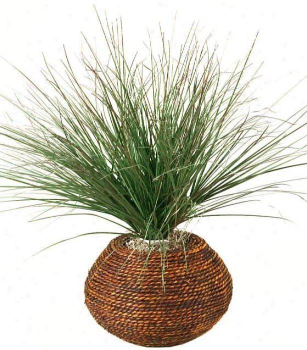 """burgundy Onion Grass In Round Braided Rope Planter - 16""""hx16""""w, Green"""