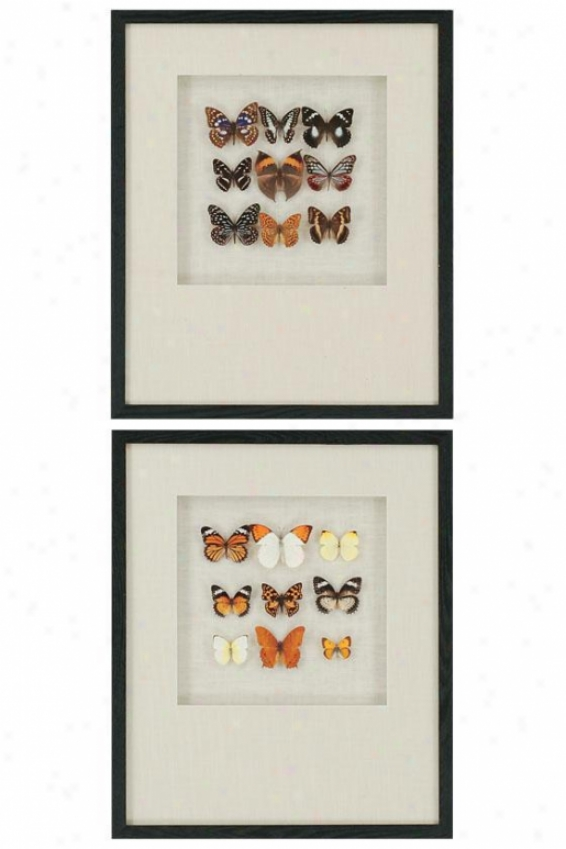 """""""butterfly Study Wall Att - Set Of 2 - 24""""""""hx20""""""""w, Beige"""""""