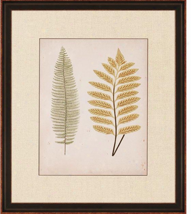 """cottage Ferns - 32""""hx27""""w, Ii"""