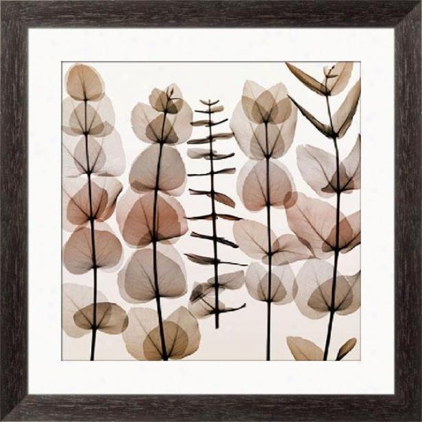 """eucalyptus Ii Framed Wall Art - 33""""hx33""""w, Esprso Cibe Frm"""