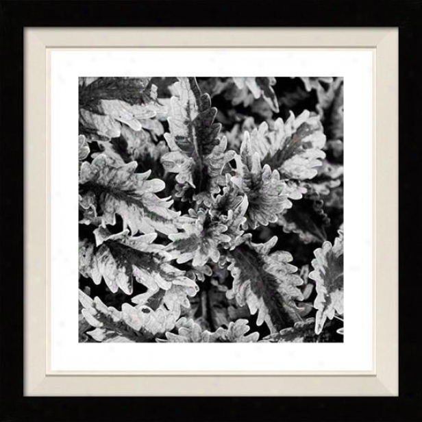 """fern Framed Wall Art - 30""""hx30""""w, Floated Black"""