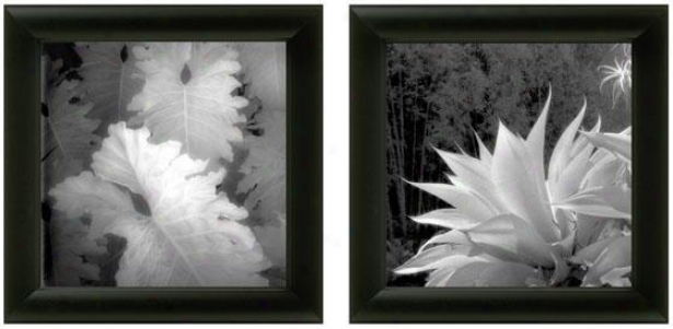Floral Exotica Framed Wall Art - Set Of 2 - Set Of Two, Wicked