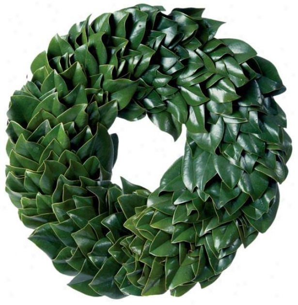 """fresh All Green Magnolia Wreath - 30"""", Fresh"""