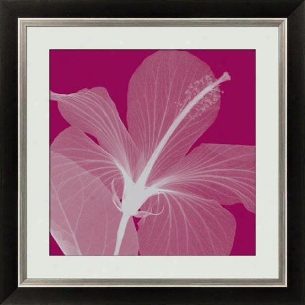 """""""hibiscus Silver Framed Wall Art - 25.5""""""""hx25.5""""""""w, Bk W/slv Lip Fm"""""""