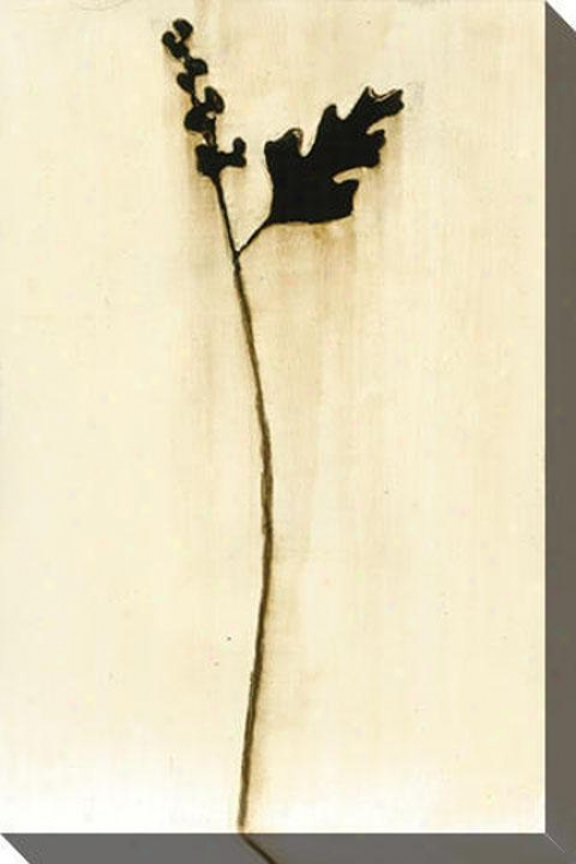 Natural Element Ii Canvas Wall Art - Ii, White