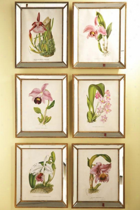Orchidees Orchid Wall Art - Set Of 6 - Set Of 6, Clear