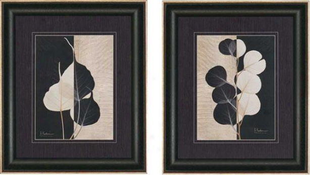 Parchment Leaves Wall Art - Set Of 2  -Set Of Two, Blavk And White