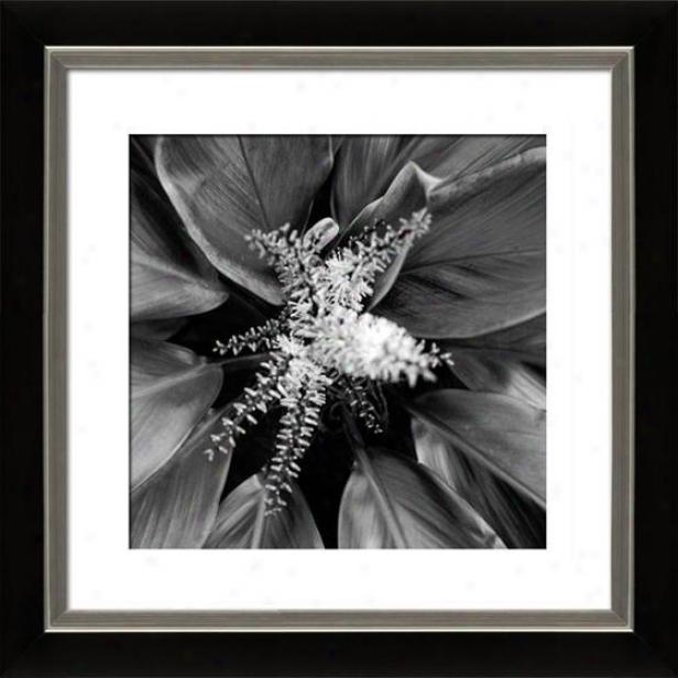 """""""pollinator Framed Wall Art - 29""""""""hx29""""""""w, Mttd Black/slvr"""""""
