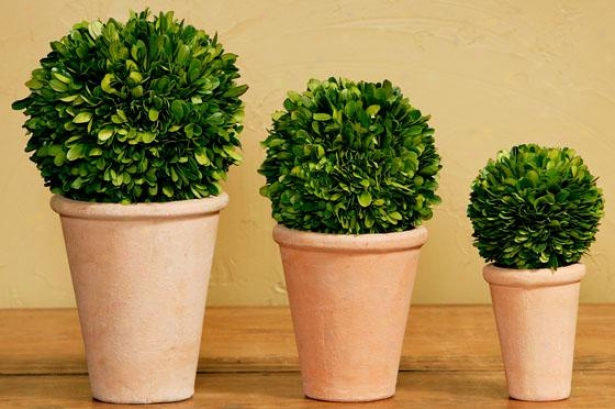 Potted Boxwood Balls - Set Of 3 - Set Of Three, Green