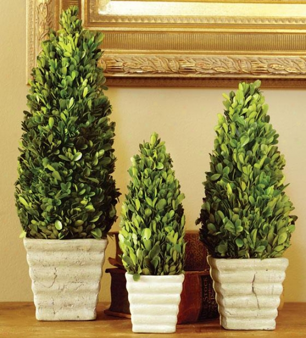 Potted Boxwood Topiaries - Set Of 3 - Set Of Three, Green
