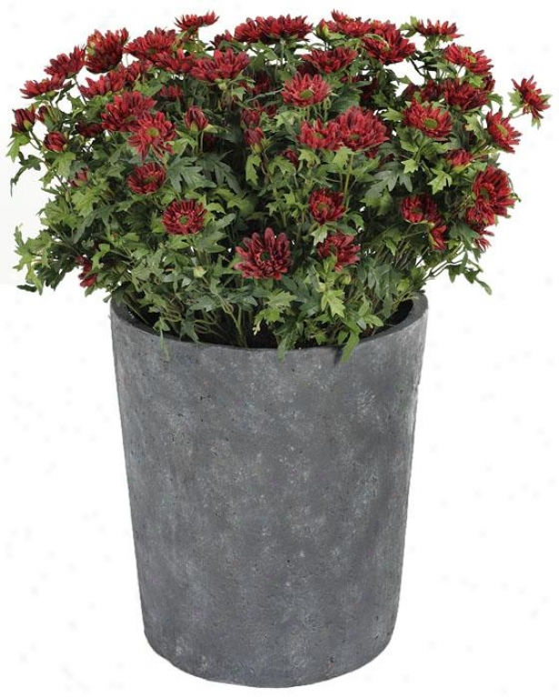 """potted Mini Chrysanthwmum - 25""""h, Red"""