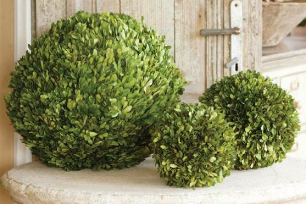 """prrserved Boxwood Ball - 16"""" Diameter, Green"""