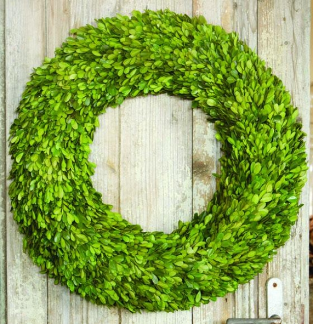 """preserved Boxwood Wreaths - 24"""" Diameter, Green"""