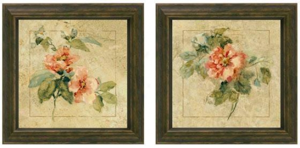 Provence Rose Framed Wall Skill - Set Of 2 - Ste Of Two, Cream
