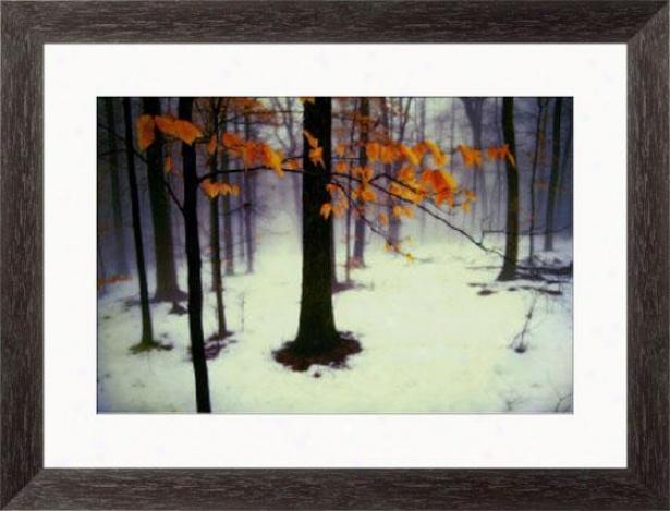 """quiet Woods Framed Wall Art - 25""""hx33""""w, Esprso Cube Frm"""