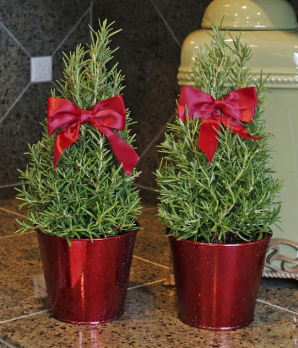 """rosemary Topiary - Set Of 2 - 12""""hx6""""w, Green"""