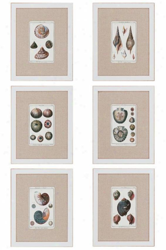 Sea Shells Wall Art - Set Of 6 - Set Of 6, White