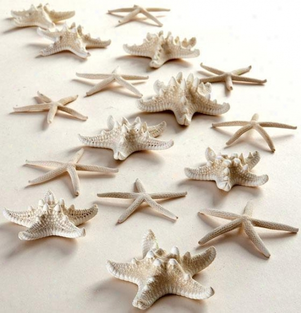 Starfish In Mesh Bag - Set Of 16 - Set, White
